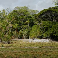 link to dune gallery: photo of dune forest and               marshes